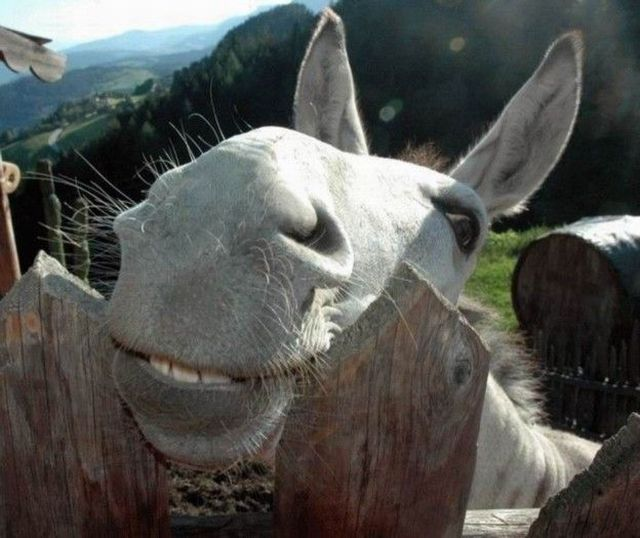 http://img40.xooimage.com/files/1/8/9/animals_203_04-1700120.jpg