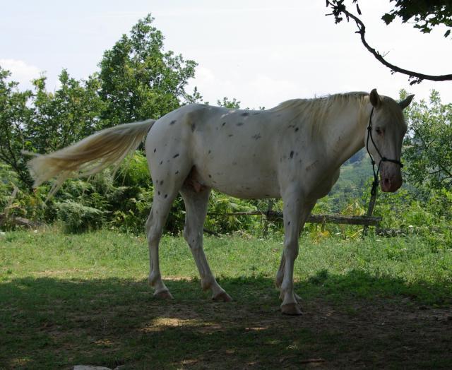 appallosa  Imgp1873-1e2f996