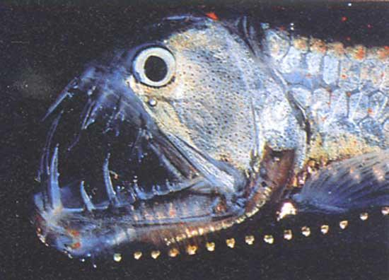 blog big fish poker