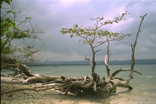 beau-fond-d-ecran-plage-flora