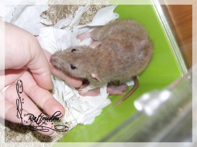 [25] Ma petite Lolita est maman ^^ Dscf4745-fca1a4