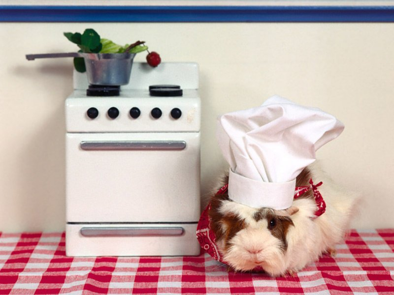 lapin-cuisinier-fond-d-ecran-flora