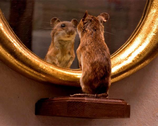 souris-miroir-humour-flora